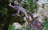 Der springende Frosch